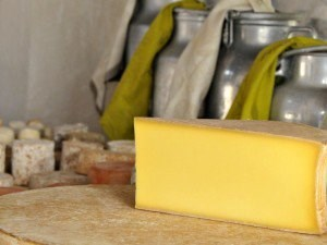 Biogas Production Turns to Cheese
