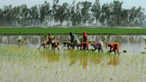 Farmers to get 2 lakh energy efficient pump sets in Andhra Pradesh