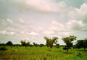 """Tây Phi lên kế hoạch xây dựng """"Hành lang Năng lượng sạch"""" toàn khu vực"""