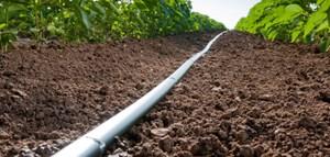 Sóc Trăng ứng dụng công nghệ tưới nước nhỏ giọt tiết kiệm