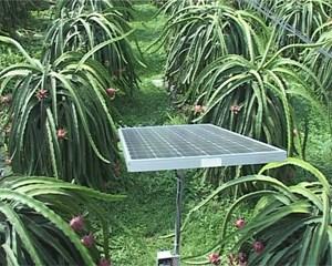 Công nghệ tưới nước bằng năng lượng mặt trời ở Bình Phước và Ninh Thuận