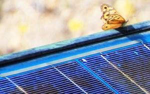 Mitsubishi sẽ đầu tư vào công ty năng lượng mặt trời của Mỹ Nexamp