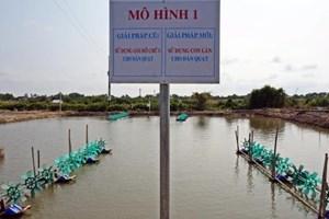 Tiết kiệm điện trong nuôi tôm tại Đồng bằng sông Cửu Long - Bài 1: Mối lo về an toàn điện