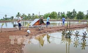 Tiết kiệm điện trong nuôi tôm tại ĐBSCL - Bài 4: Nhìn từ việc triển khai tại Sóc Trăng