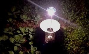 Tăng hiệu quả sản xuất nông nghiệp mà vẫn tiết kiệm điện nhờ đèn năng lượng mặt trời