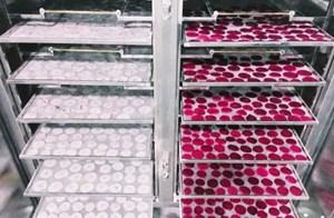 Sấy trái cây bằng thiết bị bơm nhiệt kết hợp hồng ngoại và khử khuẩn: Tiết kiệm hơn 30% thời gian và điện năng