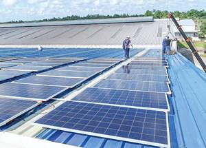 Hỗ trợ doanh nghiệp sử dụng năng lượng bền vững
