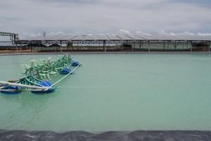 Lợi ích từ việc kết hợp nuôi tôm và sản xuất điện mặt trời